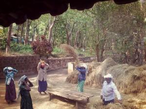 Indian women seperating rice