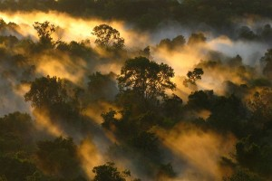 forests as cloud makers
